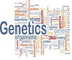 Genetics Assignment Help