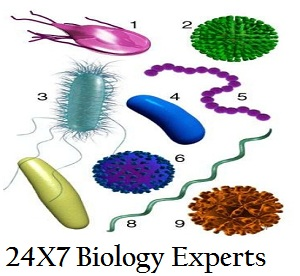 microbiology assignment help