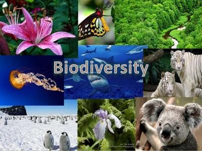 biodiversity assignment help