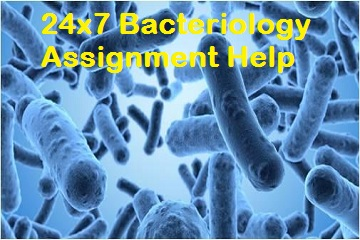 Bacteriology assignment help