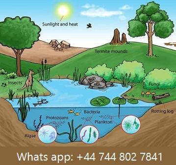 ecosystem assignment help